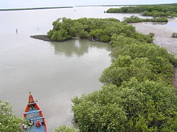250px-Fringing_mangroves,_mudflat_and_in_Muthupet_Lagoon