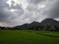 250px-View_of_Kalvarayan_Hills_from_Arasampattu